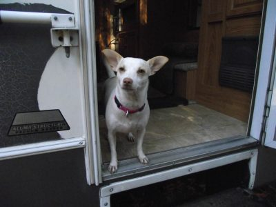 Cricket standing in RV doorway
