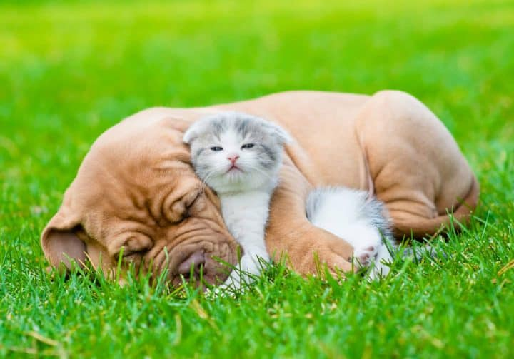 Dog and cat cuddling in grass