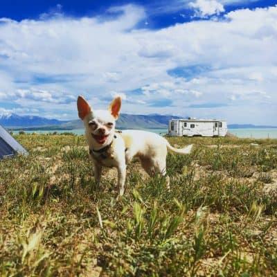 Gizmo at Utah Lake