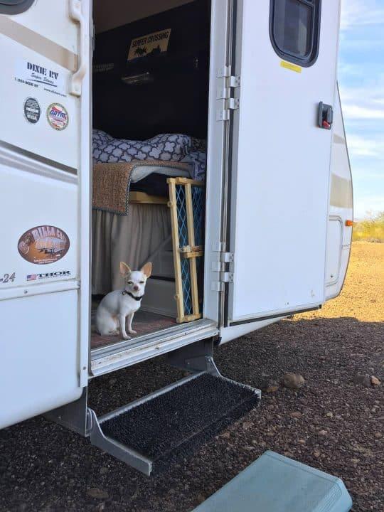 Gizmo in trailer doorway