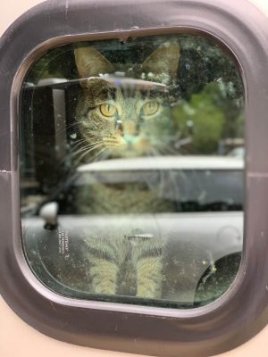 Jane Noye's cat looking out RV window