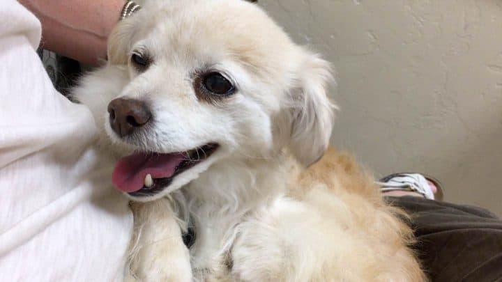 Kelly's dog Trixie