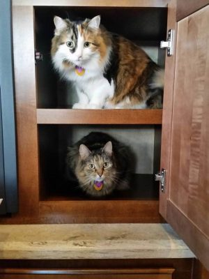 Lisa and Dan's kitties in cupboard