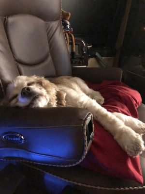 Susan Collier's dog Tex on RV seat