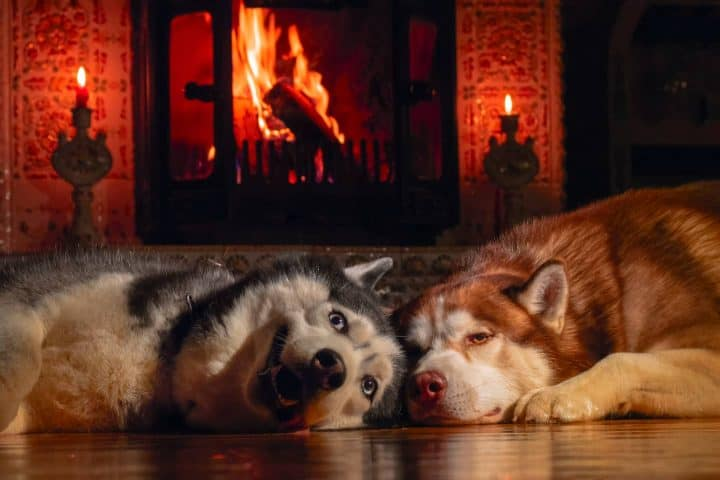 Two dogs lying in front of fireplace
