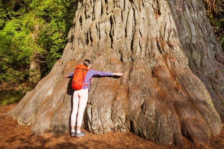 woman hiker hugging redwood tree